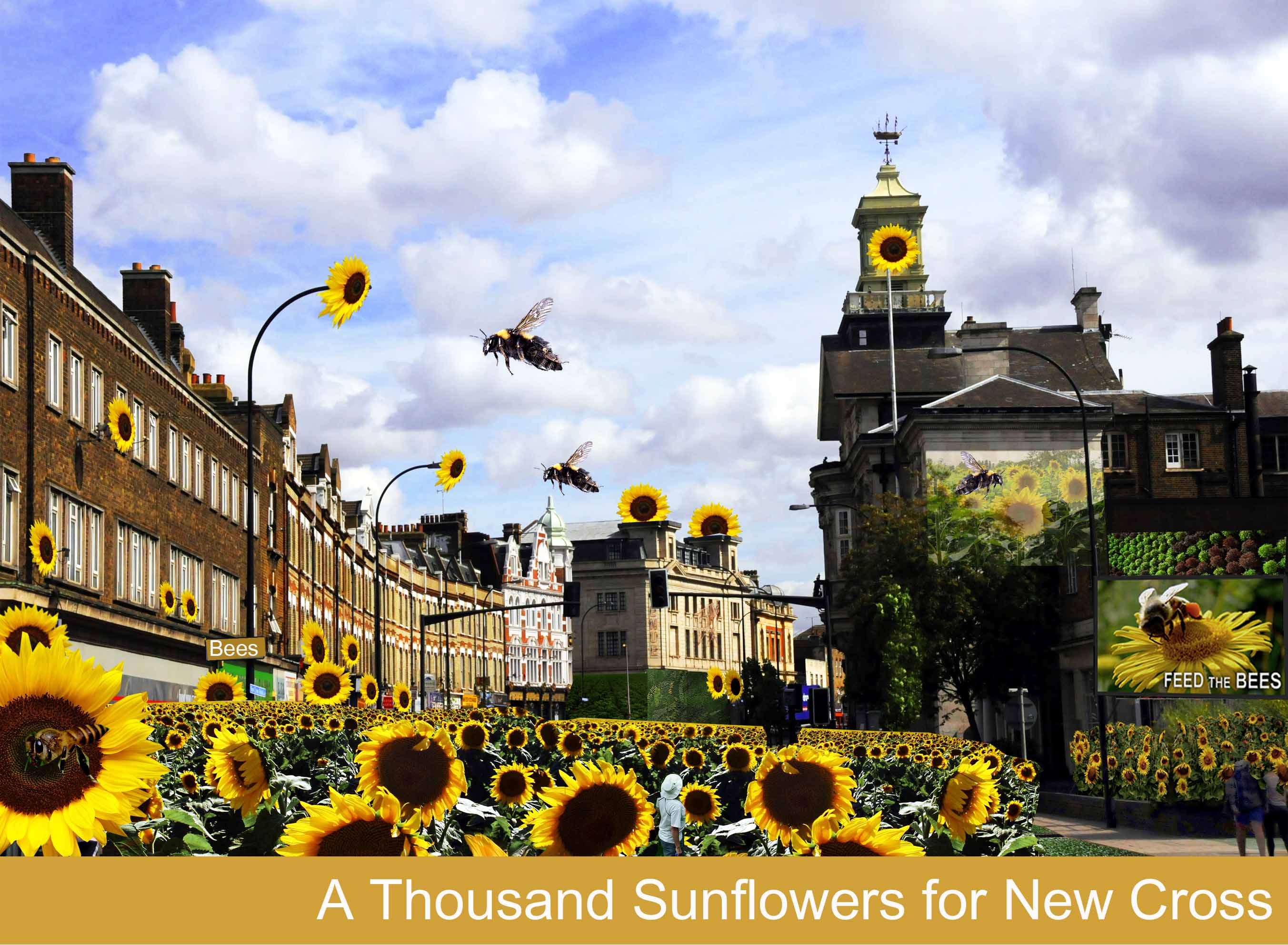 Grow Wild 1000 Sunflowers for New Cross - web med