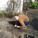Sowing at Goldsmiths site