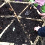 Various flower bulbs planted. Which way up does the pointy bit go?