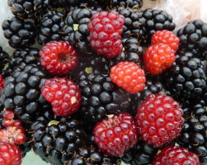 wineberry blackberry