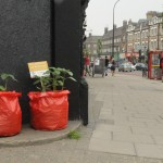 Grow bags on the high road